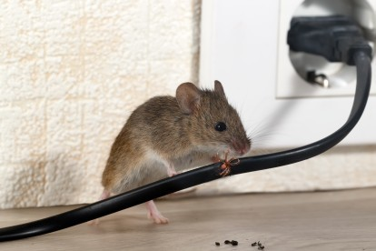 Pest Control in West Wickham, BR4. Call Now! 020 8166 9746