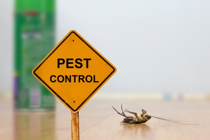 Pest Contol in West Wickham, BR4. Call Now 020 8166 9746